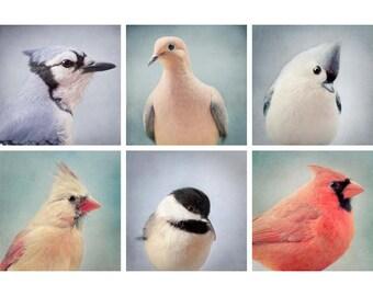 Bird Print Set, Bird Photography, Wall Art, Animal, Home Decor, Wildlife, Wall Decor, Fine Art Photography, Kids Room, Animal Art Photo Set