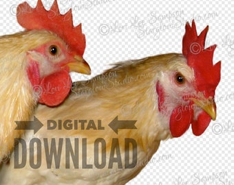 Digital Clipart | Farm Chickens Stock Photo | White Hens Scrapbooking Clip Art Photo | Animal Stock Photo | Craft Supplies