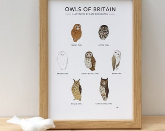 Owls of Britain print - illustrated bird poster - wildlife / nature wall art - educational chart