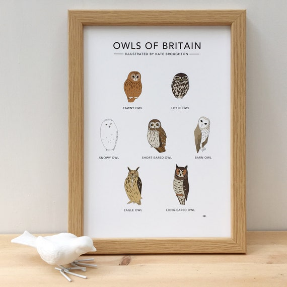 Owls of Britain print