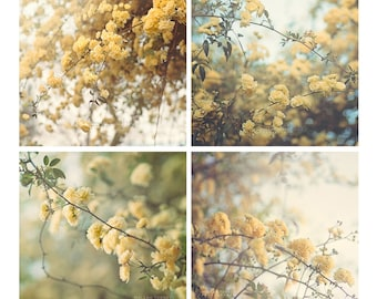 Photo Set, Yellow Flowers Photography, Yellow Roses, Pastel Wall Art, Green, Yellow, Blue, Cottage Chic Decor, 4x4, 5x5, 8x8, 10x10, 12x12