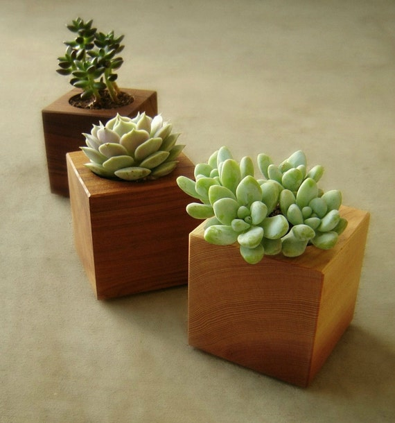 Succulent Planters, Modern Indoor Planters, Cubist Design in Recycled Wood