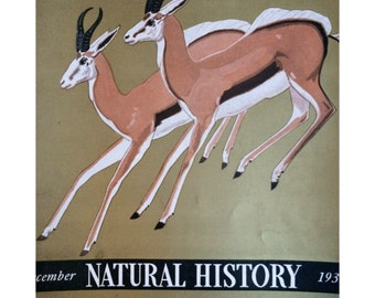 Natural History Magazine cover, December 1939 w. springbok