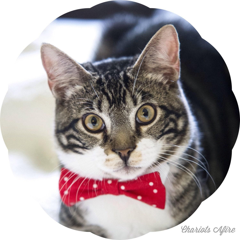Kitten In A Bow Tie Il Fullxfull Bfan