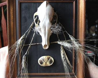 Blight (Five of Coins) - tarot-themed assemblage sculpture with coyote skull, dried plants, turtle shell, wood frame - upcycled materials