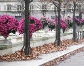 Paris Photography, Pink Mums Paris Print, Large Art Print Fine Art Photography, Affordable Art