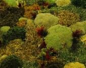 Moss wall decor, Autumnal