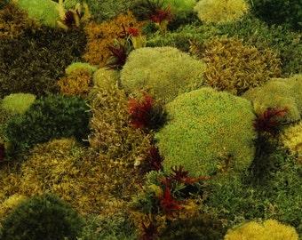 SALE, Moss wall decor, Autumnal