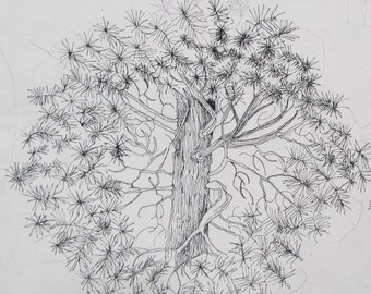 Pine Trees,  pen and ink, drawn & signed by the artist  Only one