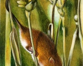 ACEO Limited Edition Hand Embellished PRINT Harvest Mouse Mice Animal Wildlife ART