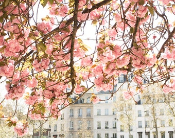 Paris Photography, Spring by the Seine, Pink Cherry Blossoms, Paris Art, Photograph, Nature, Paris Home Decor, Blush Pink, April in Paris