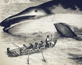 1840s-1850s Antique Engraving of the Fin Whale