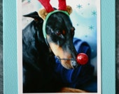 Doberman photo card, dog dressed up as Rudolph the reindeer, Christmas, holidays, antlers, red nose