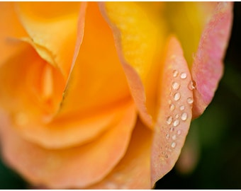 Orange Rose Flower Fine Art Canvas wrap -Dew -Raindrops -Petals