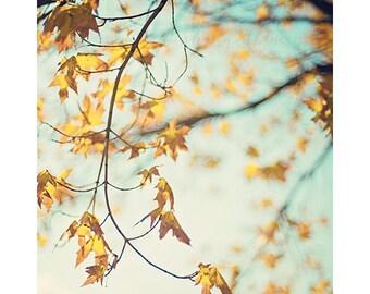 autumn fall foliage nature photography / gold, yellow, golden, robins egg blue, turquoise, aqua, leaves / autumn glow / 8x10 fine art photo