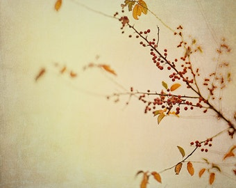 autumn nature photography / fall foliage, moody, rust, texture  / branch out / 8x10 fine art photograph
