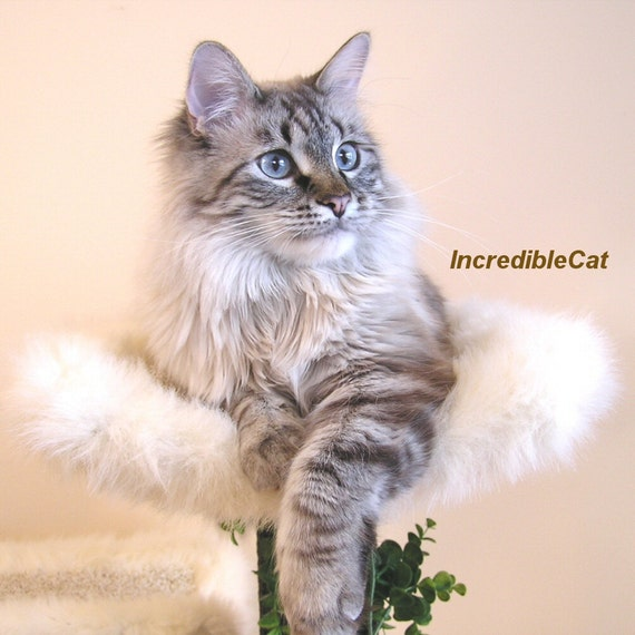 LUXURY CAT TREE. 4' High Best Cat Bed, Cat Lover Gift, Elegant Cat Condos, Modern Cat Tree, Custom Cat Trees, Sturdy Cat Steamboat 4F1C1L