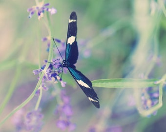 Blue Garden Butterfly - Lovely Blues, Greens, and Purples in this Fine Art Home Decor Photo Print