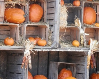 Fall Pumpkin Collage photograph, Fall Pumpkins, Fine Art Photograph, Halloween, Nature, 5x7 or 8x10 with or without matting, Ready to Ship