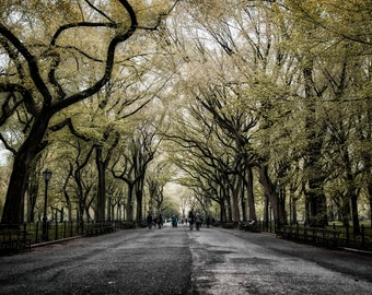 """New York City Photography - """"Fairytale of New York"""" Central Park  - 11x14 Print, Matted to 16x20 - fits in standard frame"""