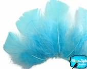 Turkey Feathers, 1 Pack - LIGHT BLUE Turkey T-Base Plumage Feathers 0.50 oz. : 3809