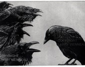 Raven artwork , Raven, crow,  black bird,  Jackdaw, Aesop Fables,  etching