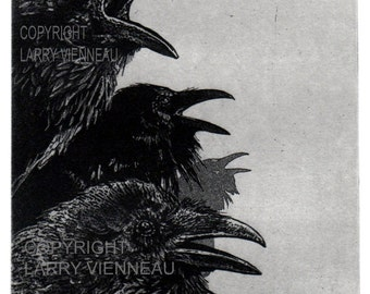 Raven artwork , Raven, crow,  Etching, 5 inch x 7 inch 2013