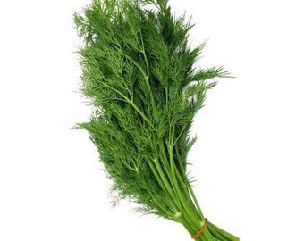 Organic Bouquet Dill Seeds