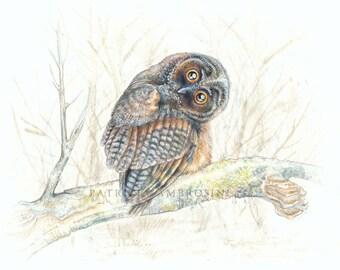 Original Watercolour 10X8 LONG hEARED oWL.. Not a print ..original painting, animal ,fine art,