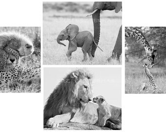 Baby Animal Nursery Art Prints, Set of 4 Black & White Photos, Elephant, Lion, Cheetah, Giraffe, Kids Room Decor, Safari Nursery Wall Art