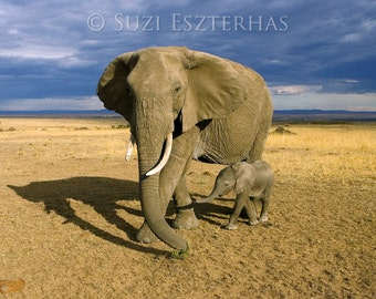 BABY ELEPHANT and MOM Photo, Safari Nursery Art Print, Baby Animal Photograph, African Wildlife, Kids Room, Baby Nursery Decor, Baby Shower