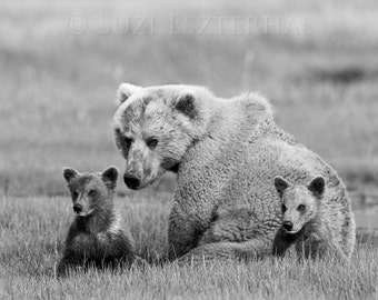 MOM and BABY BEARS Photo, Black and White Print, Baby Nursery Decor, Wildlife Photography, Mother and Baby Animals, Grizzly Bear, Safari