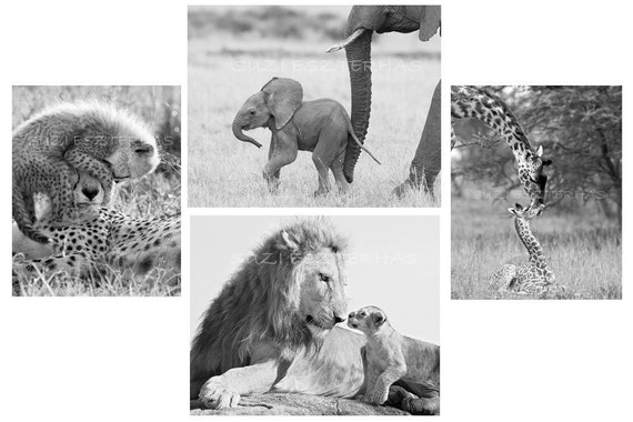Safari Nursery Art Prints, Baby Animals, Set of 4 Black & White Photos, Elephant, Lion, Cheetah, Giraffe, Kids Room Decor, Nursery Wall Art