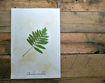 Real Pressed Sensitive Fern Frond Herbarium Specimen