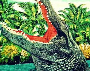 alligator print | Tropical Retro Florida Gator photograph | salmon aqua color | Alligator nursery Reptile kids room beach tropical decor