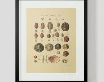Vintage Shells Ocean Sea Clams Snails Plate 10