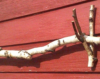 Natural Birch Branch Curtain Rod White and Brown with Knotty Markings 70""