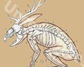 Jackalope Skeletal Dissection (8.5 x 8.5)