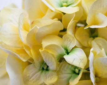 Silk Flowers - One Jumbo Artificial Hydrangea Head in Yellow - Top Quality Artificial Flowers