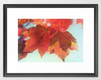 Maples, Large, Print, Fine Art Photography, Autumn, Fall, Home Decor, Coordinated Colors, fPOE, (6 sizes)