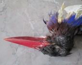 Tropical Bird Specimen - SHIP FREE