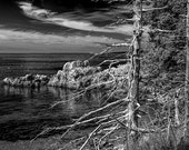 Tree Trunks with Shoreline Rocks in Acadia National Park on Mount Desert Island in Maine No.BW063 A Fine Art Seascape Photograph