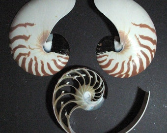 Natural Tiger Striped & Pearl Sliced Nautilus Shell for Collections, Weddings, Sea Shell Arts and Crafts