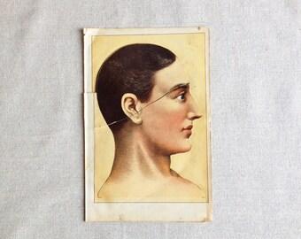 1892 Antique Medical Phrenology Lithographic Illustration