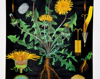pulldown canvas dandelion print poster chart wall hanging amazing