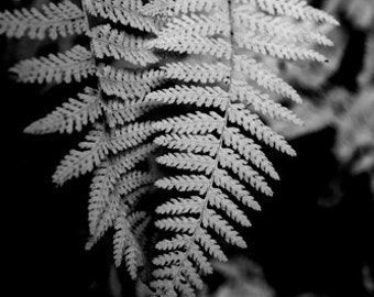 Ferns, Black and White, Nature, Simple, Leaf, Plant, Black, White, Simple,, photograph
