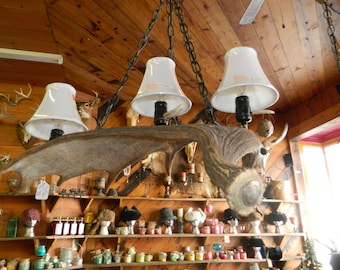 Hanging Moose Horn Light