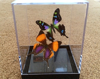 Purple Pair Framed Butterflies Table Top