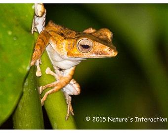 Set of quantity 5: Borneo Rainforest Frog Photo Card