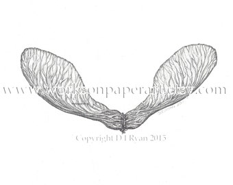Art - Home Decor - Woodland - Maple Seed Pod II - Limited Edition Glicee Print from Original Drawing
